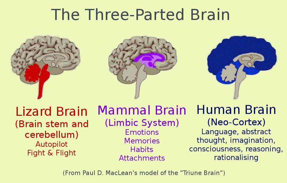 Triune Brain - Your Own Best Friend